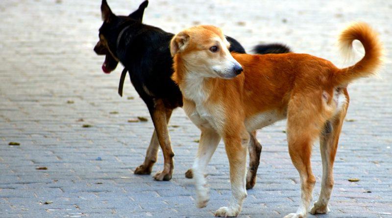 Informacja dla mieszkańców posiadających psy